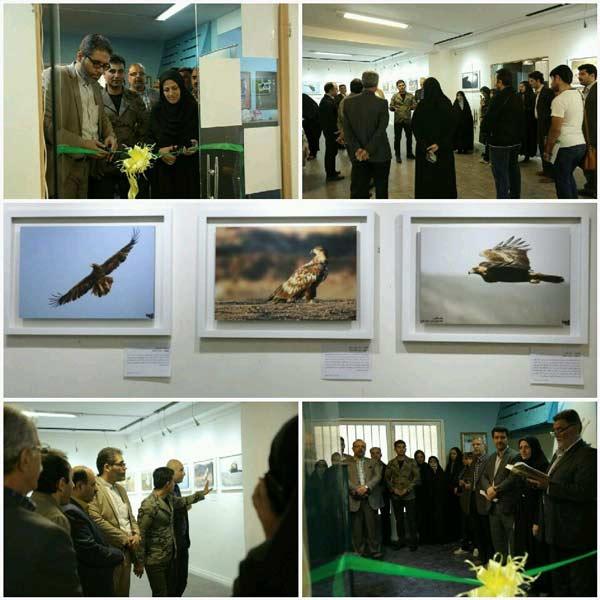 نمایشگاه عکس حیات وحش در البرز